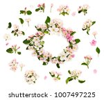 wreath of flowers apple tree on ... | Shutterstock . vector #1007497225