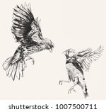 pair of finches vintage hand... | Shutterstock . vector #1007500711