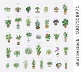 home plants cartoon hand drawn... | Shutterstock . vector #1007558971