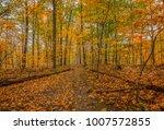Autumn Woodland Trail Scene. ...