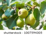 tasty young green healthy... | Shutterstock . vector #1007594305