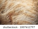 fur of ginger cat | Shutterstock . vector #1007612797