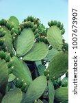 Fresh Succulent Cactus Closeup...