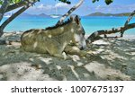 a donkey on the beach... | Shutterstock . vector #1007675137