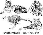 vector drawings sketches... | Shutterstock .eps vector #1007700145