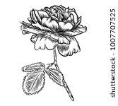 flowers. hand drawn rose. roses ... | Shutterstock .eps vector #1007707525