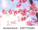 pink blossoms on the branch...   Shutterstock . vector #1007722681