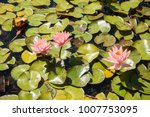 beautiful lotus and waterlily... | Shutterstock . vector #1007753095