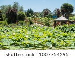 beautiful lotus and waterlily... | Shutterstock . vector #1007754295
