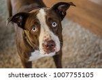 sad dog face | Shutterstock . vector #1007755105