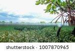 wild saltwater crocodile... | Shutterstock . vector #1007870965
