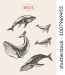 collection of realistic whales  ...   Shutterstock .eps vector #1007969455