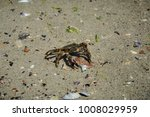 Solitary Green Crab On The...