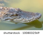 crocodile saltwater thailand | Shutterstock . vector #1008032569
