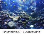 undersea world.  group of fish... | Shutterstock . vector #1008050845