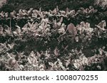gardening  weeding weeds....   Shutterstock . vector #1008070255