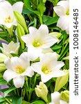 bouquet of white lilies.... | Shutterstock . vector #1008146485