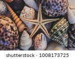 macro view of seashells and... | Shutterstock . vector #1008173725