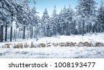 winter text of snow    Shutterstock . vector #1008193477