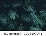 green leaves. low key modern... | Shutterstock . vector #1008197041