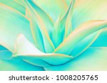 agave leaves in trendy pastel... | Shutterstock . vector #1008205765