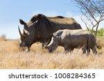 white rhinoceros female with... | Shutterstock . vector #1008284365
