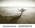 copy of old lithographic... | Shutterstock . vector #1008288205