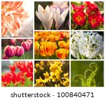 spring flowers, collage - stock photo