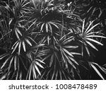 tropical palm leaves background   Shutterstock . vector #1008478489