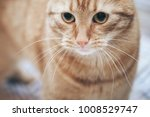 Stock photo ginger cat on the bed 1008529747