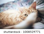 Stock photo ginger cat on the bed 1008529771