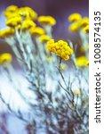 vintage meadow flowers | Shutterstock . vector #1008574135
