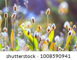 spring flowers. nature... | Shutterstock . vector #1008590941