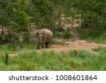 wild elephants in the jungle | Shutterstock . vector #1008601864