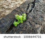 Small photo of A small tree grows on a decayed wood.