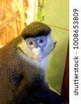 portrait of moustached monkey...   Shutterstock . vector #1008653809
