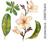 plumeria flower on a twig.... | Shutterstock . vector #1008731641