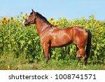 portrait of nice brown horse... | Shutterstock . vector #1008741571