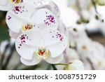 orchid flower in garden at... | Shutterstock . vector #1008751729