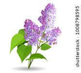 spring flowers. lilac isolated... | Shutterstock .eps vector #1008798595