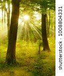 natural forest of beech trees...   Shutterstock . vector #1008804331