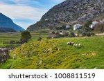 merinas sheep from grazalema in ... | Shutterstock . vector #1008811519