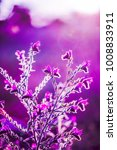 little pink wild flowers. | Shutterstock . vector #1008833911