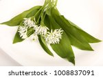 leaves and flowers of wild bear ... | Shutterstock . vector #1008837091