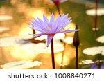 purple waterlily blossom in the ... | Shutterstock . vector #1008840271