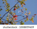 the moon and blur of bombax... | Shutterstock . vector #1008859609