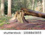 Fallen Tree In A Dutch Forest ...