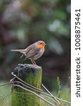 Robin Bird On A Wooden Pole In...