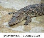 crocodile saltwater thailand | Shutterstock . vector #1008892105