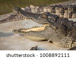 crocodile saltwater thailand | Shutterstock . vector #1008892111